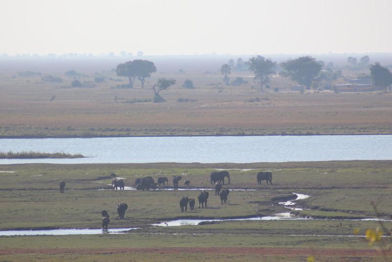 Large Elephant Herd