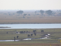 Large Elephant Herd