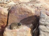 Robberg Nature Reserve