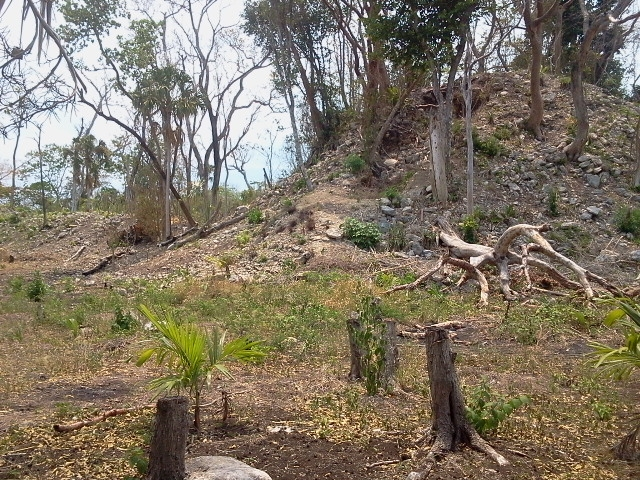 Unexcavated Mayan Ruins
