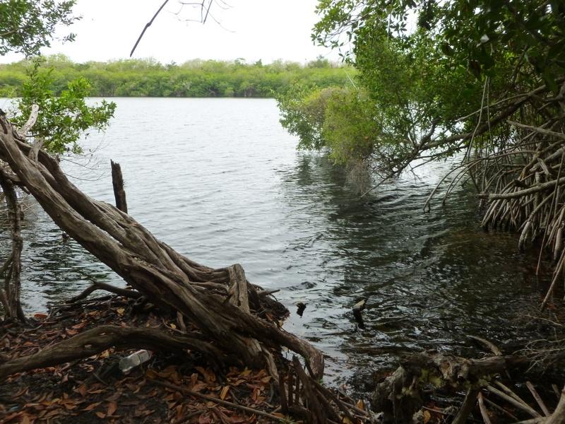 Mangrove Cenote