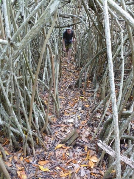 Mangroves Surrounding Cenote