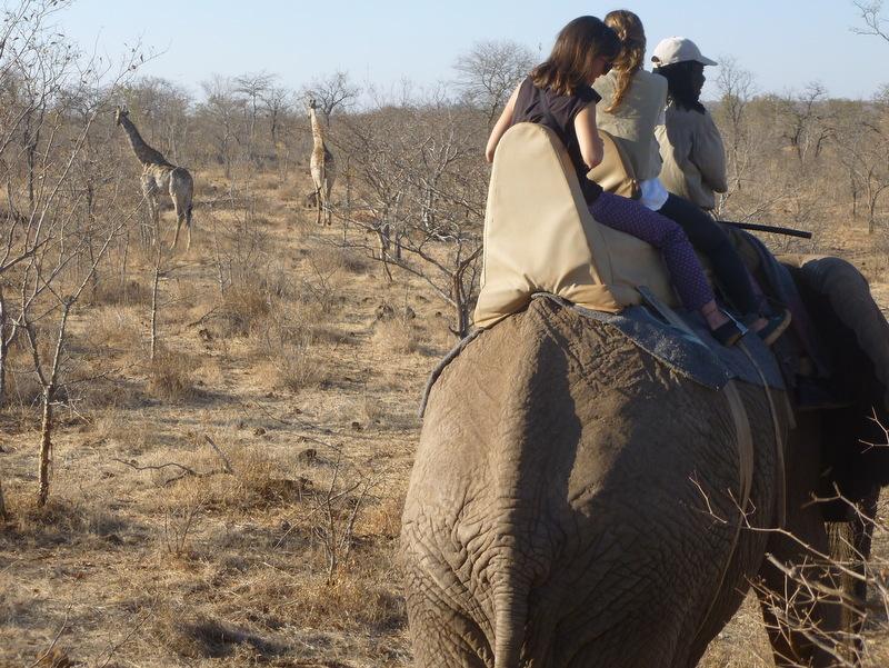 ride an elephant