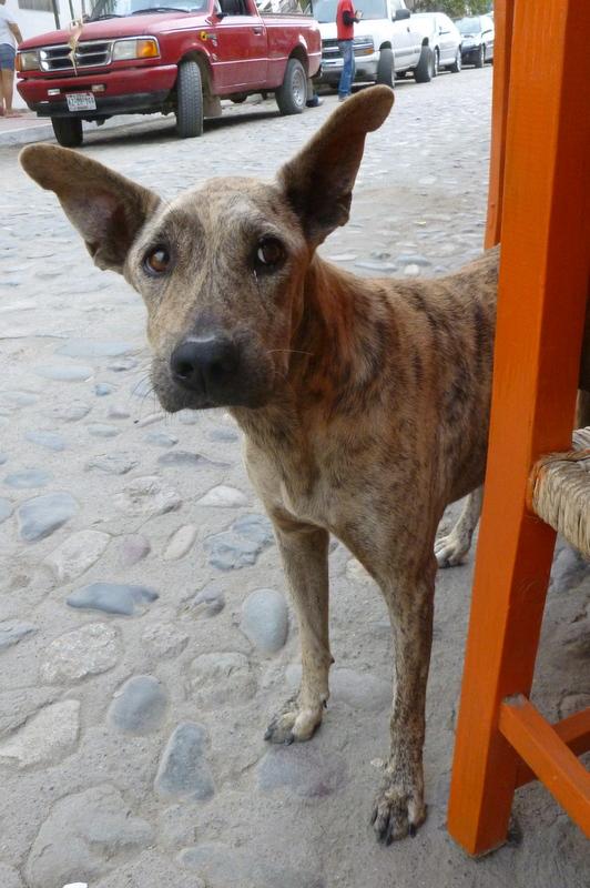 Sayulita Puppy 1