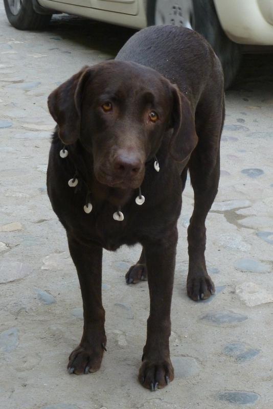 Sayulita Puppy 2