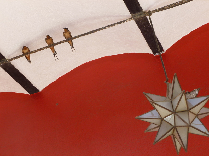 Swallows in Mexico