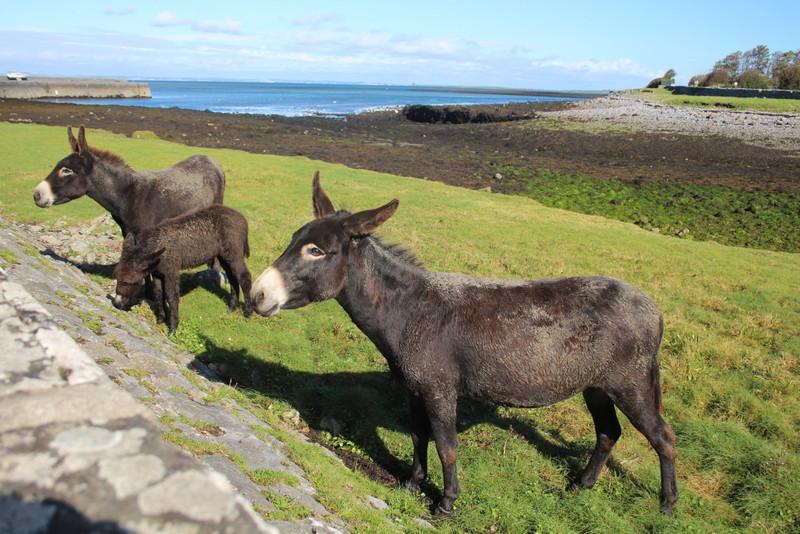 Seaside Donkies