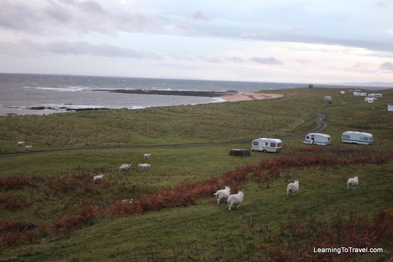Sheep at Caravan - Craikag