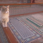 Saadian tombs Cat
