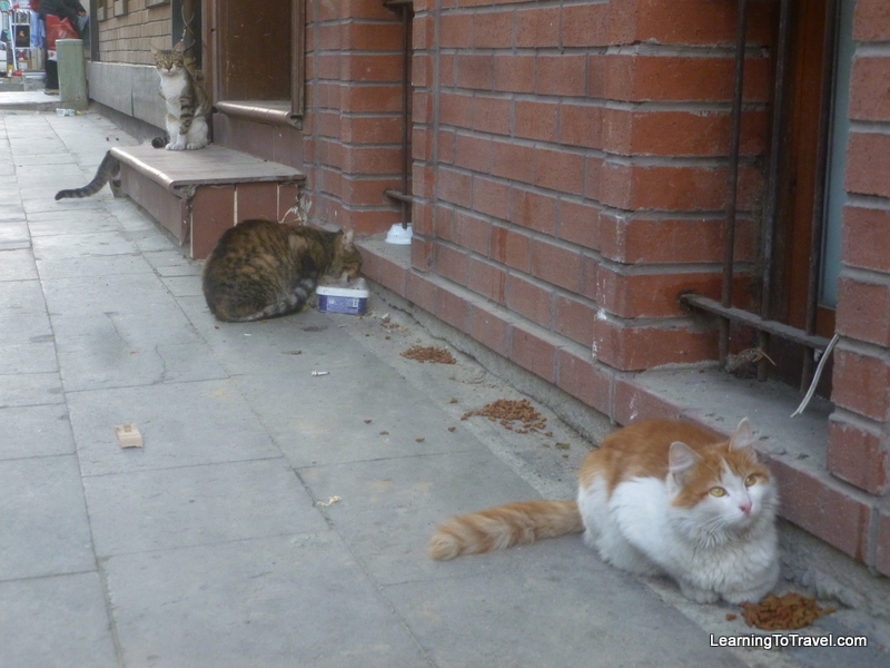 Istanbul Cats