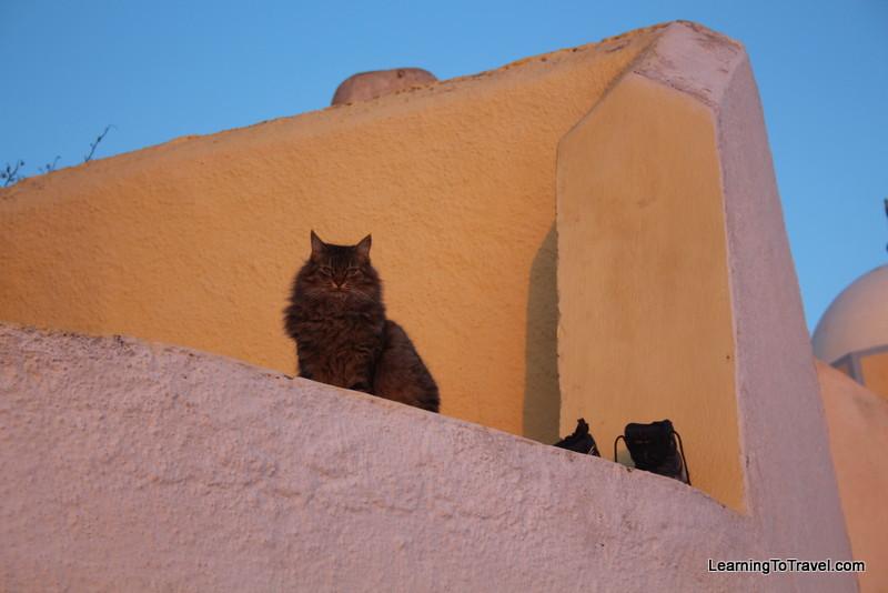 Santorini Sunset Cat