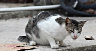 livingston guatemala cat