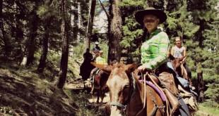 mules on the kiabob trail north rim grand canyon