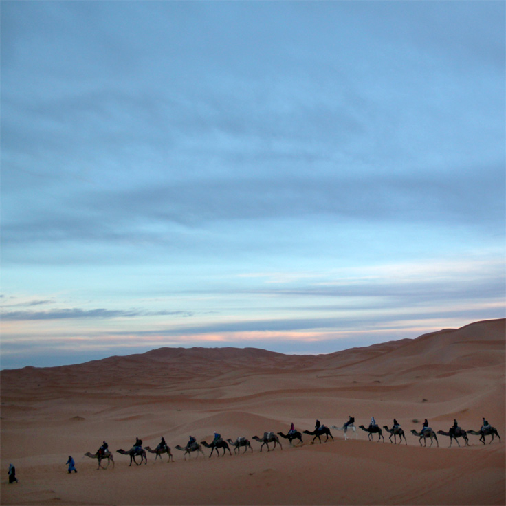 camel train in sahara desert
