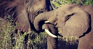 elephants in kwazulu natal
