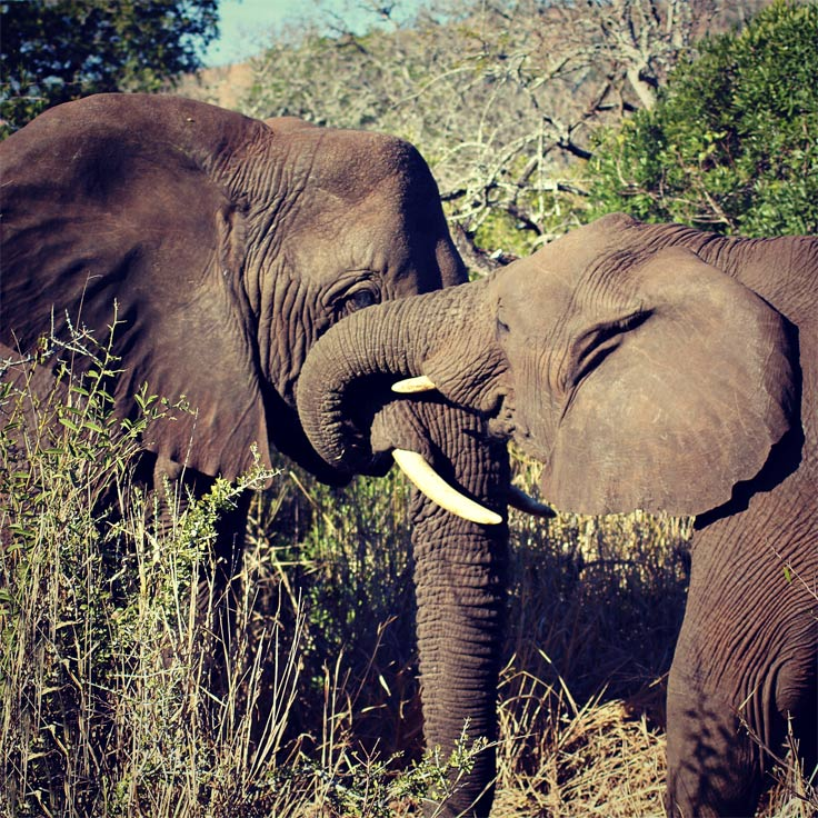 elephants in kwazulu natal