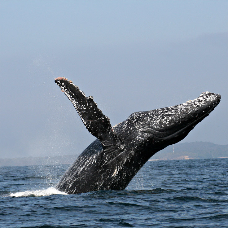 Puerto Vallarte Whale Watching