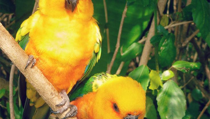 Birds Of Eden   South Africa